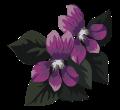 dessin-violette